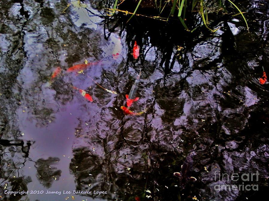 Koi Pond Photograph - Koi Reflections Evening by Jamey Balester