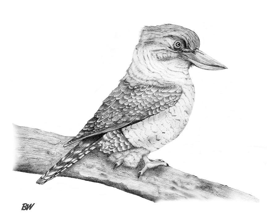 how to draw a kookaburra for kids