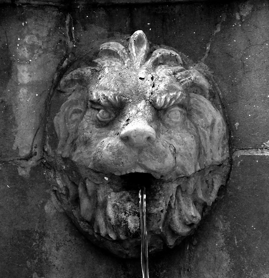 Lion Photograph - Koreshans Lion by David Lee Thompson