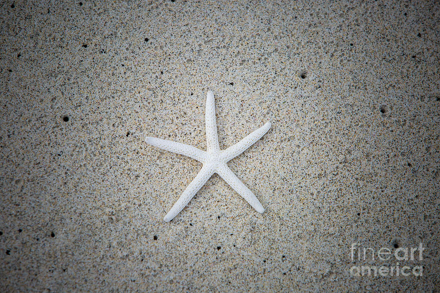 Digital Photograph - Kua Bay 16 by Daniel Knighton