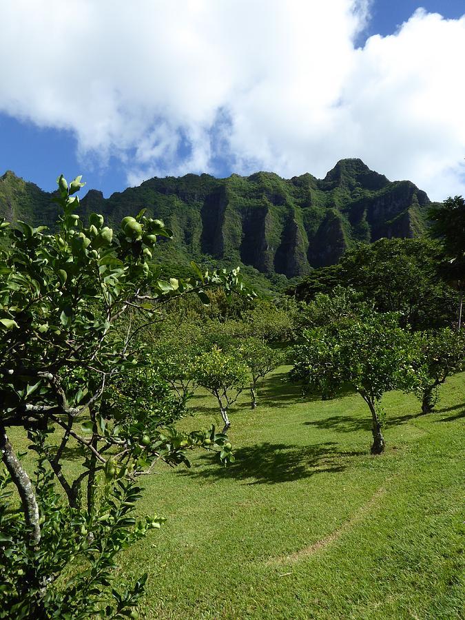 Hawaii Photograph - Kualoa Orchard by David Givens