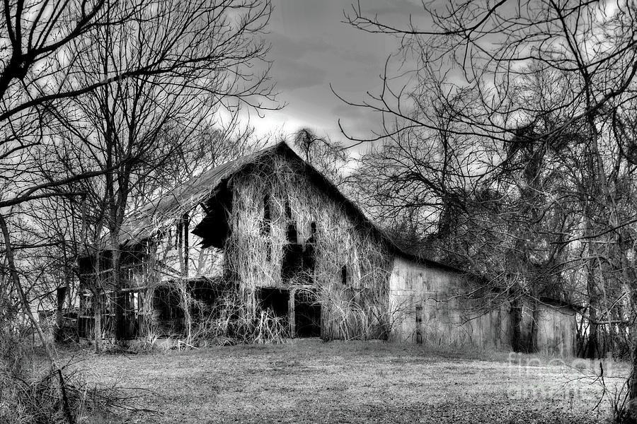 Kudzu Covered Barn in the Mississippi Delta by T Lowry Wilson