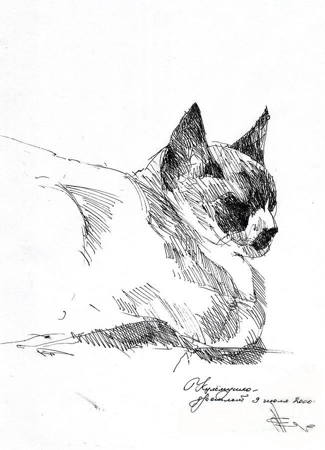 Cat Drawing - Kulemka by Natalia Eremeyeva Duarte
