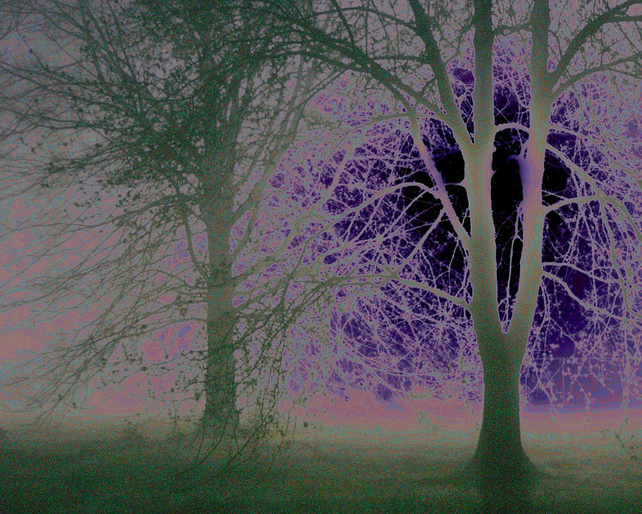 Landscape Photograph - Kyoko Trees Print by Dewese Milstead