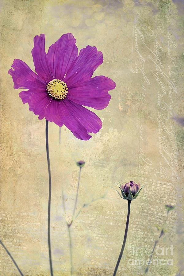 Flower Photograph - L Elancee - V04t3 by Variance Collections