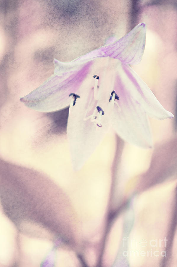 Purple Photograph - La Belleza by Angela Doelling AD DESIGN Photo and PhotoArt