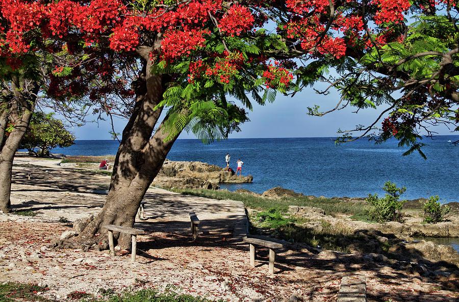 La Boca Beach by Sandra Anderson