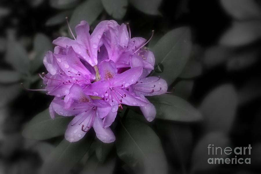 Purple Flower Photograph - La Fleur Pourpre by Karen King