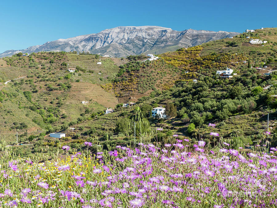 Andalucia Photograph - La Maroma In Spring by Rod Jones