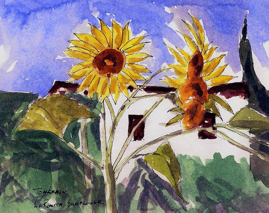Watercolors Painting - La Romita Sunflowers by Tom Herrin