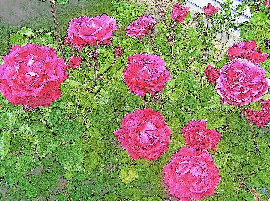 Roses Photograph - La Vie En Roses by Jen White