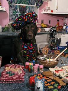 Pets Photograph - Lab Work Series - Cooking Lab by Steve Shaluta