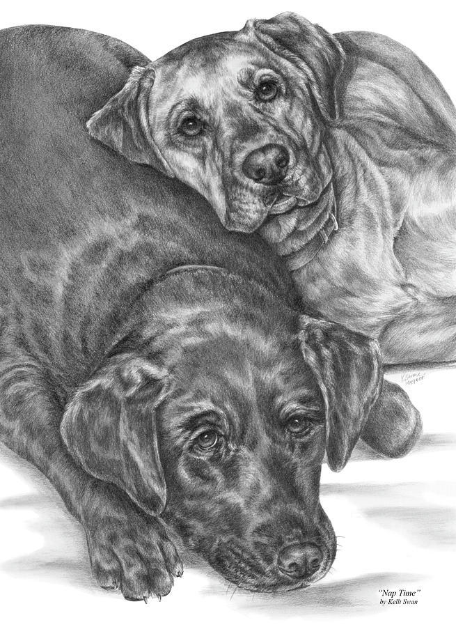 Two Drawing - Labrador Dogs Nap Time by Kelli Swan