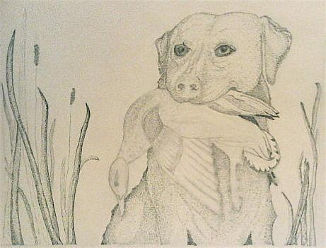 Dog Photograph - Labrador Retriever With Duck by Karen Fowler