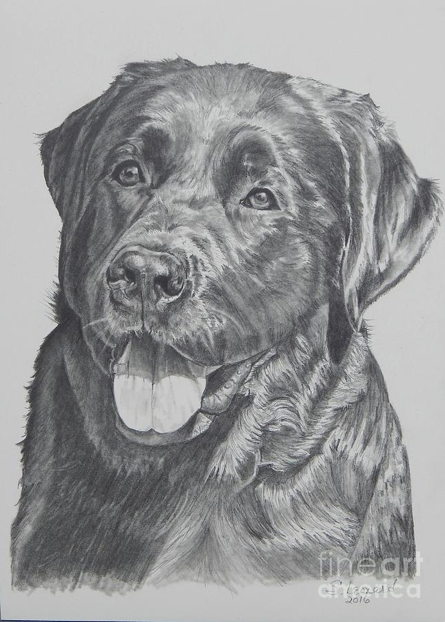 Portrait Drawing - Labrador by Suzanne Leonard