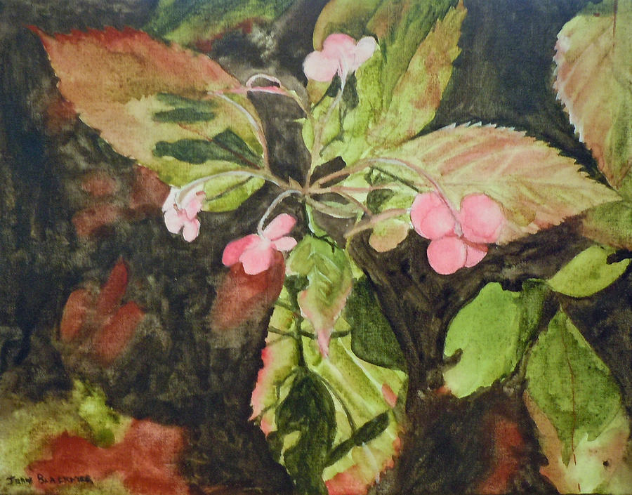 Flowers Painting - Lace Cap 1 by Jean Blackmer