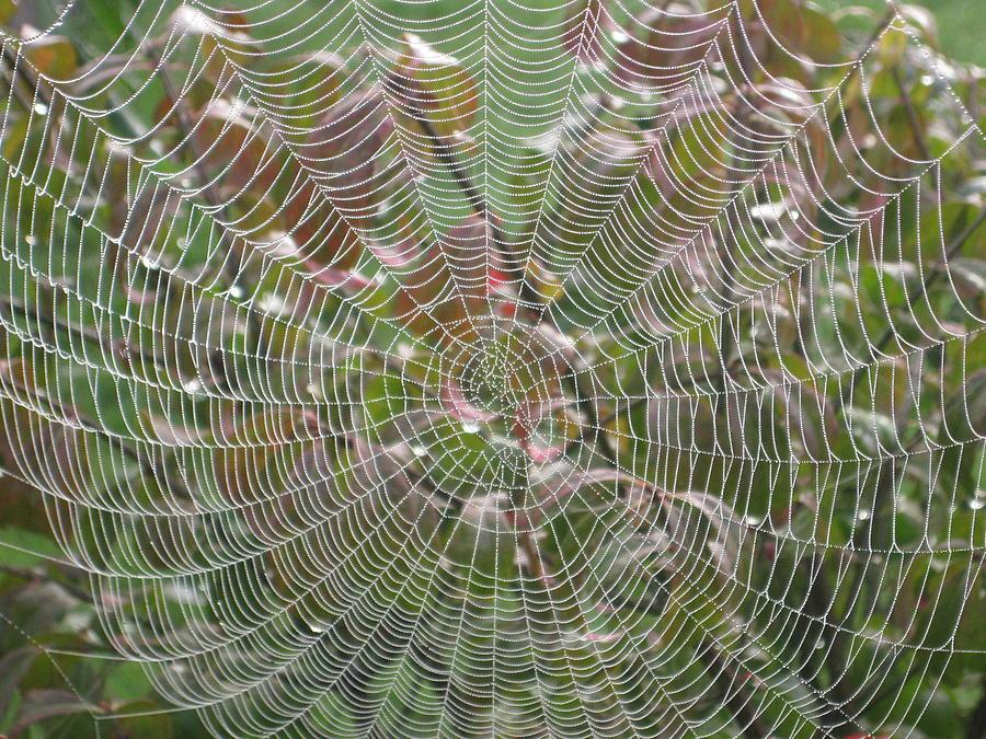 Lace Photograph by Linda Raphael