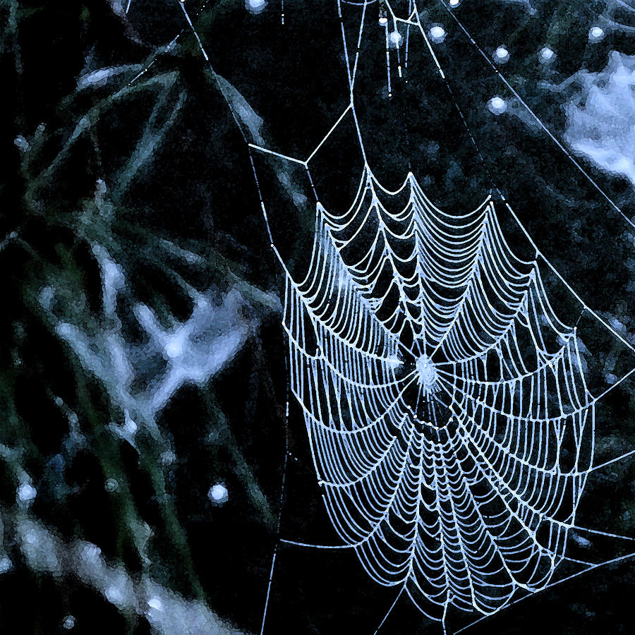 Spiderweb Photograph - Lacework by Lyle  Huisken