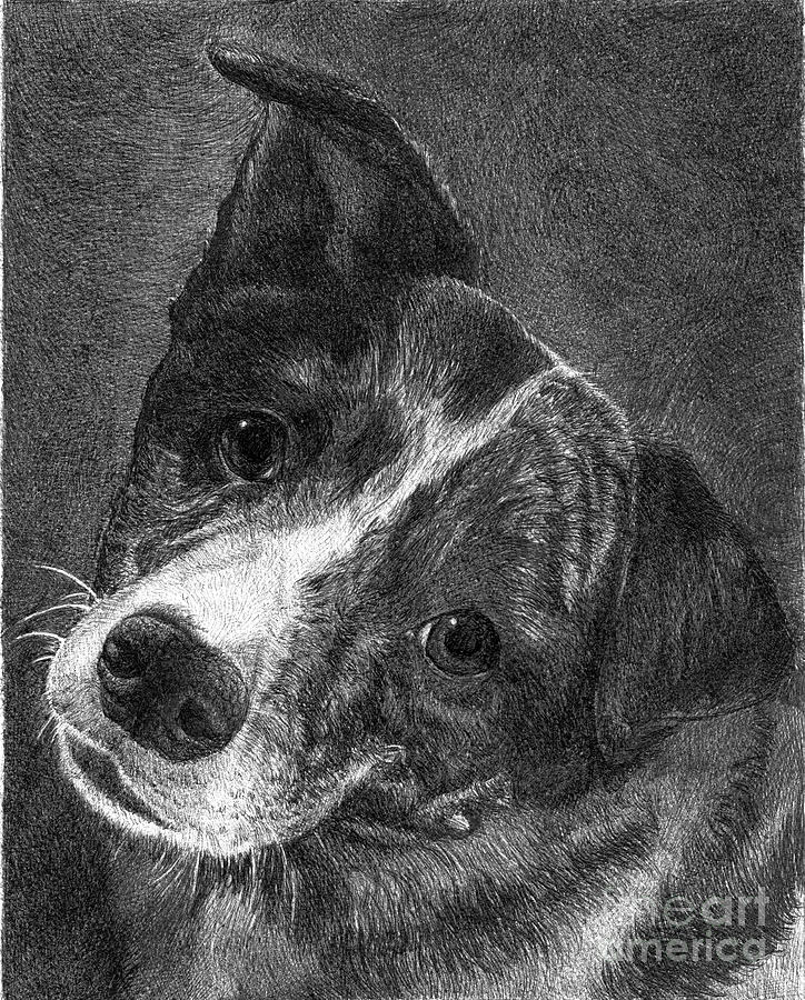 Dog Drawing - Lacey by Faithful Faces Pet Portraits