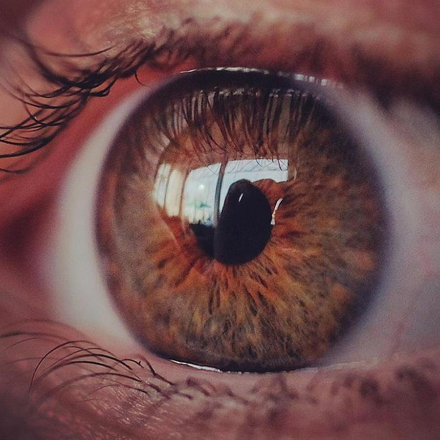 Eyes Photograph - @laciee3 #eye #eyes #macro #micro by David Haskett II