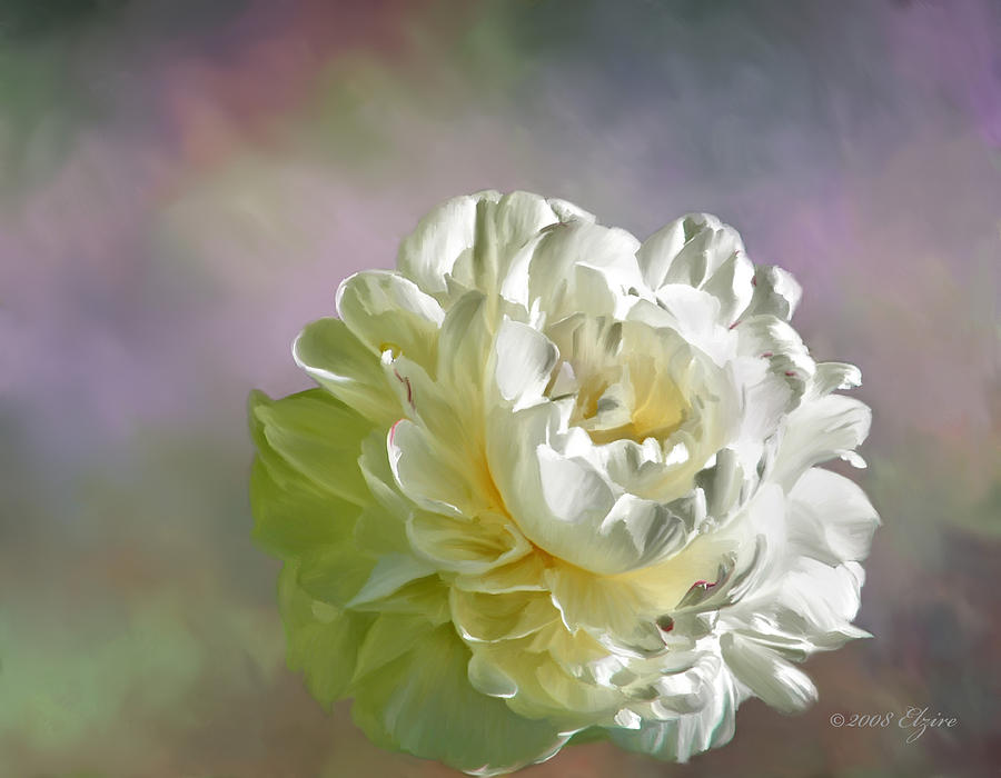White Peony Painting - Lacy by Elzire S