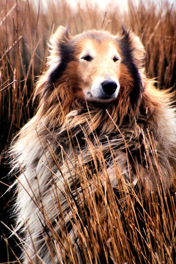 Dog Photograph - Laddie In Charge by Ellen Lerner ODonnell