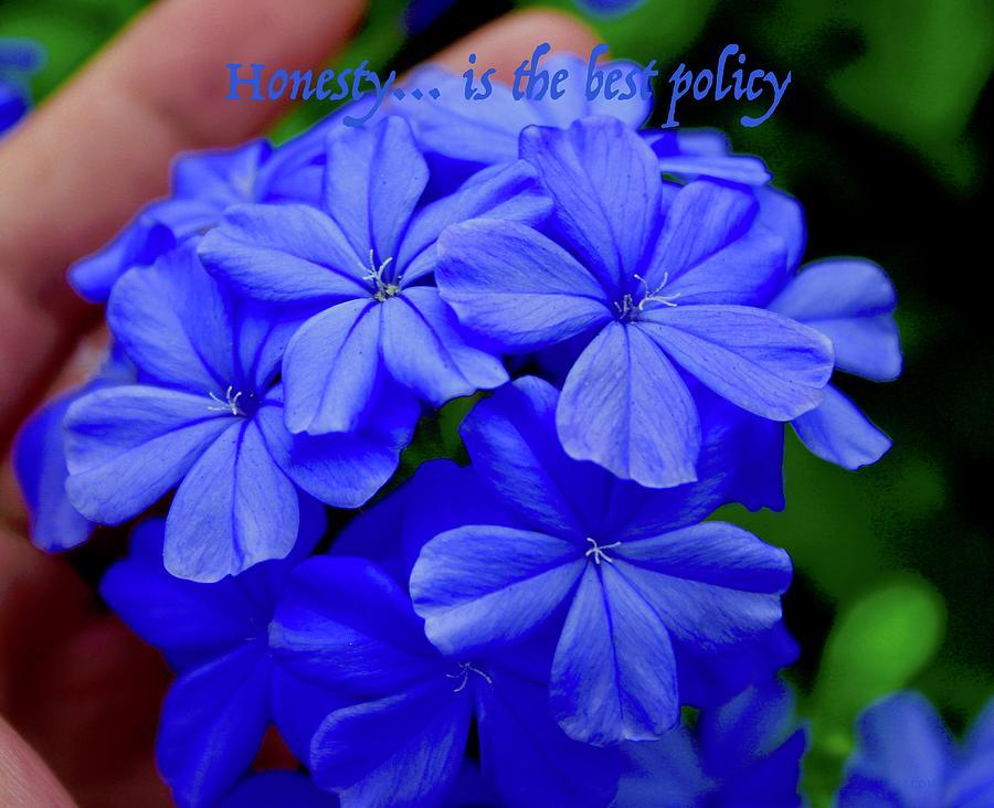 Lady Ami Flower Photograph