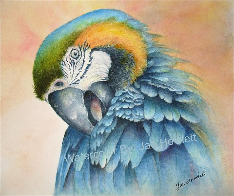 Blue Gold Macaw Painting - Lady Bird-blue Gold Macaw 138-08 by Jan Howlett