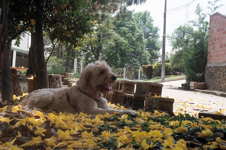 Dog Photograph - Lady Of The Gardens by David Cardona