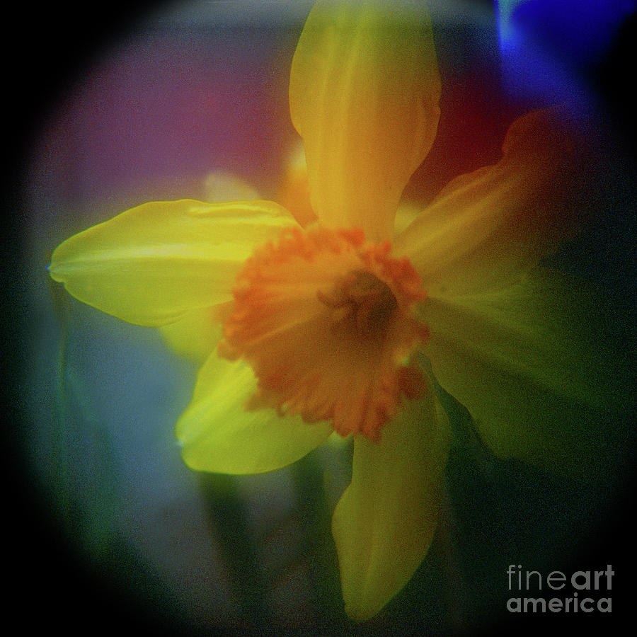 Floral Photograph - Lady Spring 1 by Paul Anderson