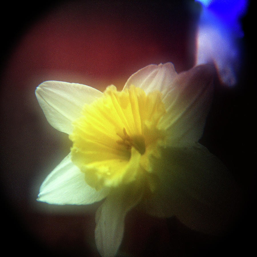 Floral Photograph - Lady Spring 2 by Paul Anderson
