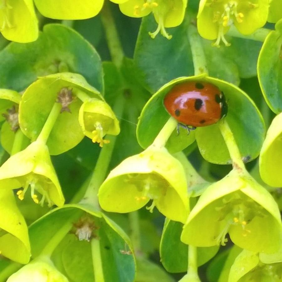 Plants Photograph - #ladybug Found Some Shelter From The by Shari Warren