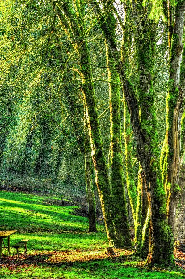 Lafayette Locks Park Photograph