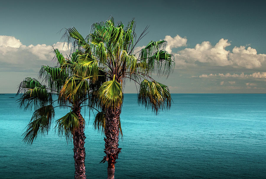 Laguna Beach Palm Trees Near La In Southern California Photograph
