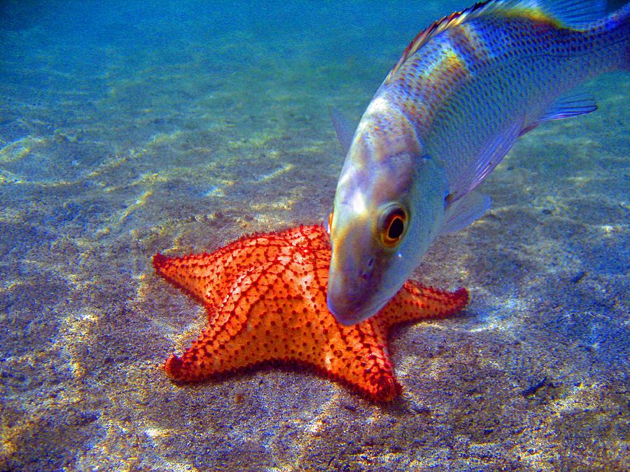Fish Photograph - Laguna Stars by Kelly     ZumBerge