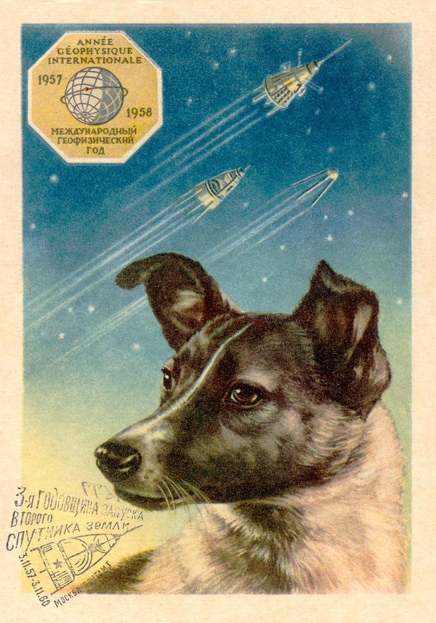Laika The Space Dog Postcard Photograph By Detlev Van