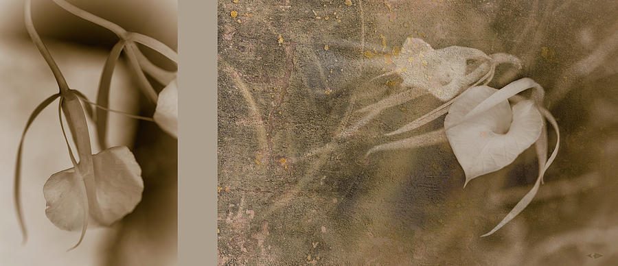 Laisse Faire 2 Diptych by HGProductions