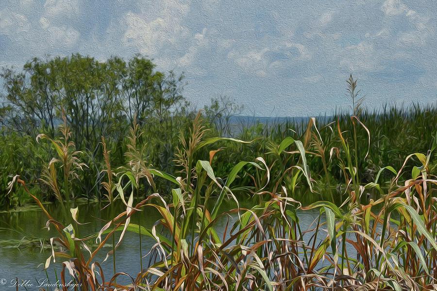 Lake Photograph - Lake Apopka by Debra Laudenslager
