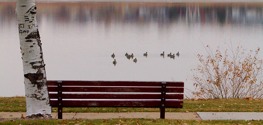 Aspen Photograph - Lake Bench by James BO  Insogna