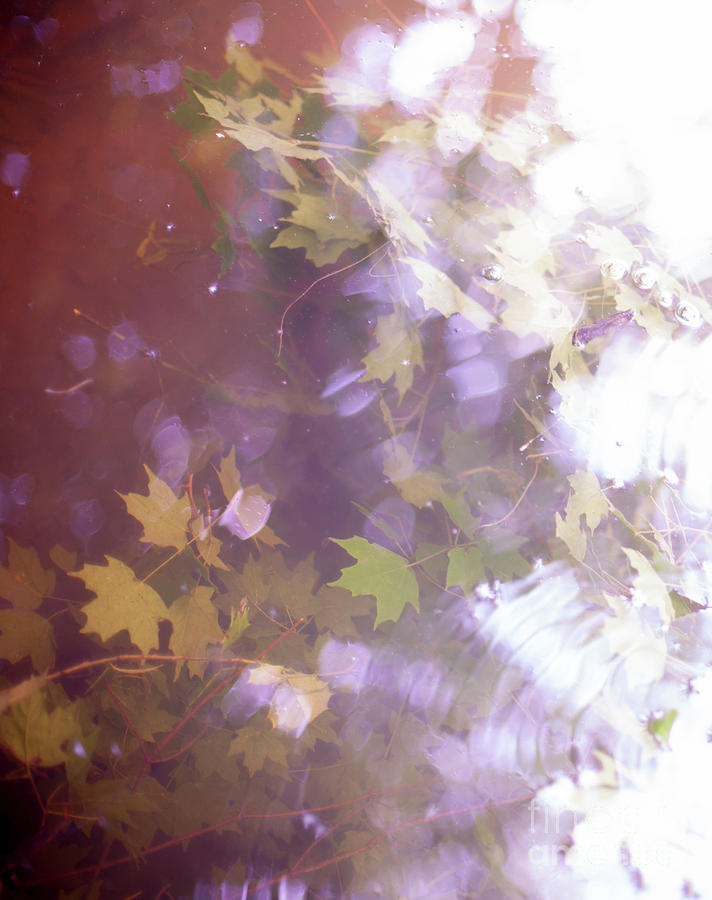 Soft Photograph - Lake Capture2 by Lacey Renae