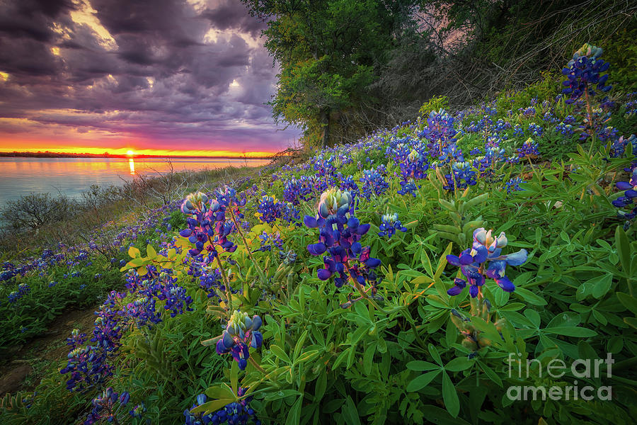 America Photograph - Lake Grapevine Twilight by Inge Johnsson