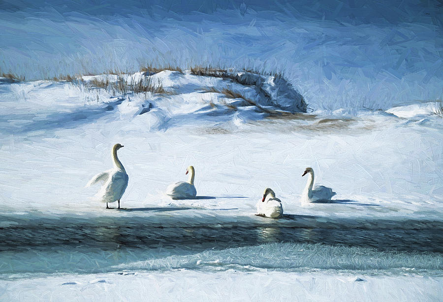 Use Photograph - Lake Michigan Swans by Dennis Cox