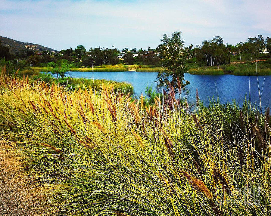 Lake Murray Grasses on Lake Shore by John Castell