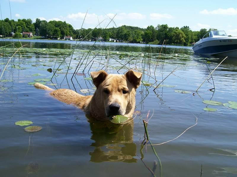 Dog Photograph - Lake Patty Lunch by Henry VanderJagt