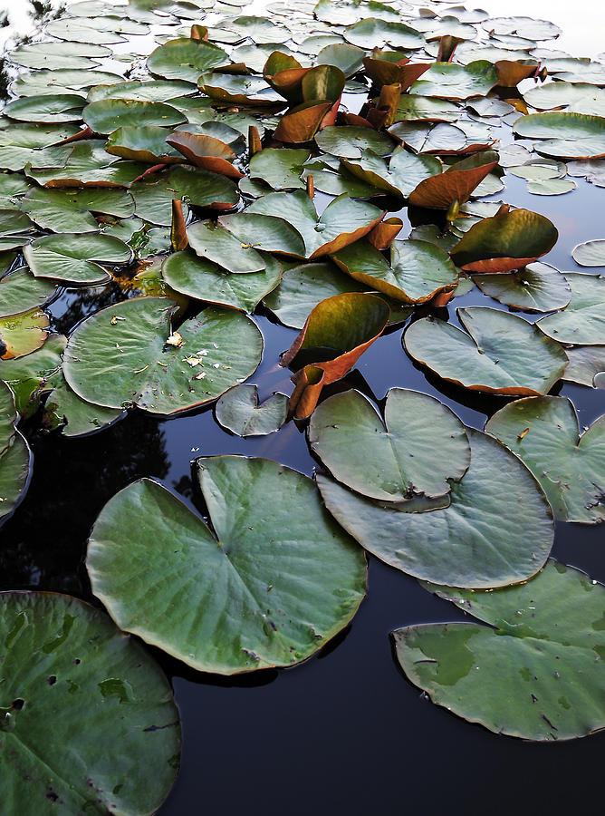 Lake Photograph - Lake Plant by Svetlana Sewell