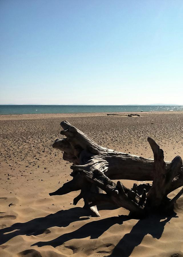 Lake Superior Driftwood Photograph by Michelle Calkins