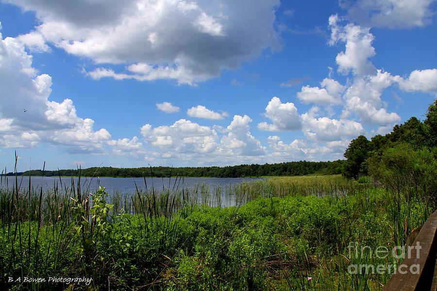 Lake Tarpon Photograph - Lake Tarpon by Barbara Bowen
