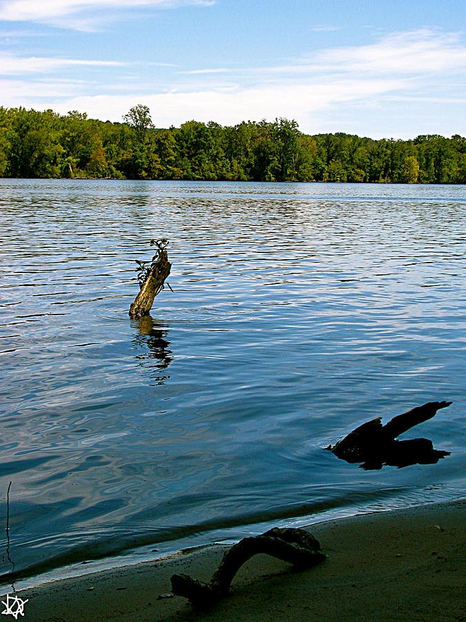 Lakeview Photograph - Lakeview   by Debra     Vatalaro