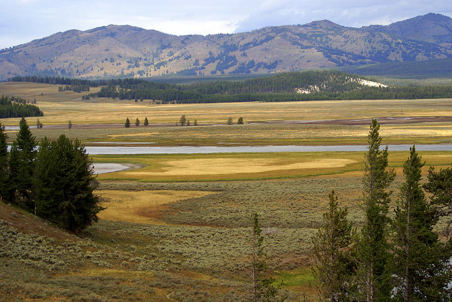 Yellowstone National Park Photograph - Lamar Valley 1 by Marty Koch