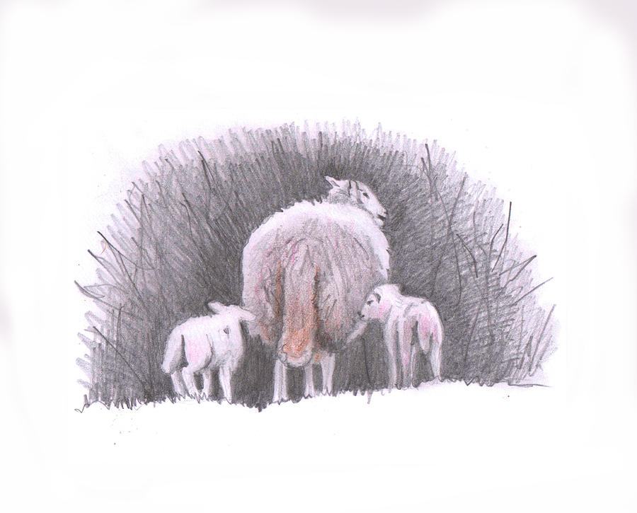 Sheep Painting - Lambs following by Helen White